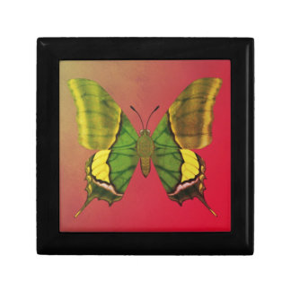 Emperor of India Butterfly Gift Box