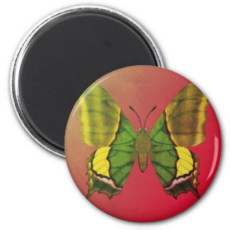 Emperor of India Butterfly Magnet