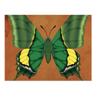 Emperor of India Butterfly Postcard