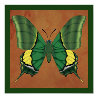 Emperor of India Butterfly Poster