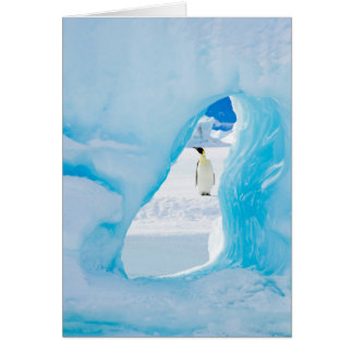 Emperor Penguin and Iceberg - note card