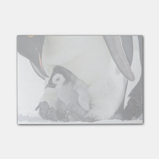 Emperor Penguin At Snow Hill Island Post-it® Notes