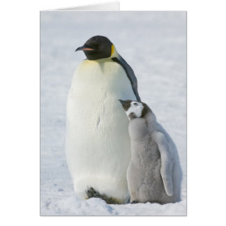 Emperor Penguin Chick - note card