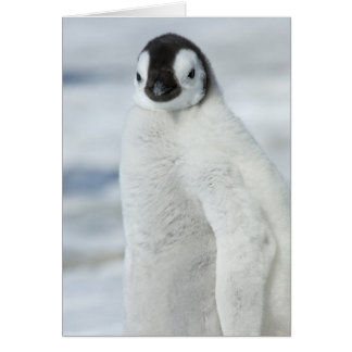 Emperor Penguin Chick -note card