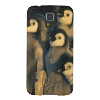 Emperor Penguin chicks in creche, Aptenodytes Cases For Galaxy S5