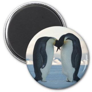 Emperor Penguin Courtship 2 Inch Round Magnet