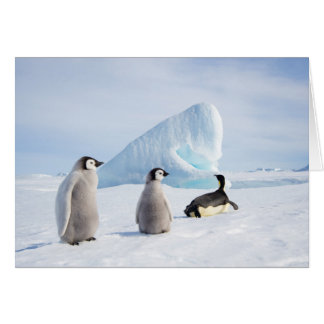 Emperor Penguin with Chicks - note card