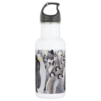 Emperor Penguin with Chicks water bottle