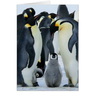 Emperor penguins card
