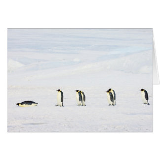 Emperor Penguins on Ice - note card