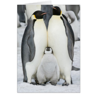 Emperor Penguins with Chick - note card