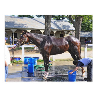"Empire Stakes Winner ""Saratoga Snacks"" Postcard"