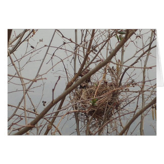 Empty Nest congratulations Card