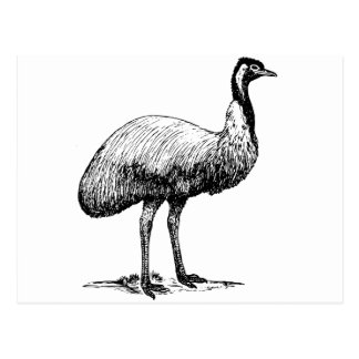 Emu Bird Postcard