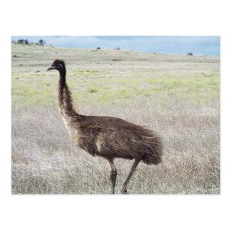 emu walk postcard
