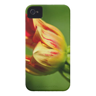 Enchanted Beginnings Case-Mate iPhone 4 Cases