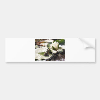 Enchanted Frog Bumper Sticker