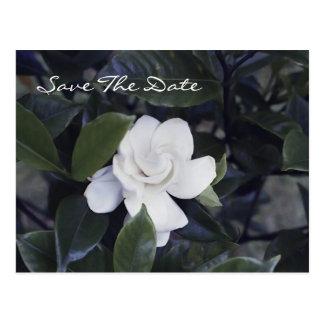 Enchanting Gardenia Save The Date Postcard