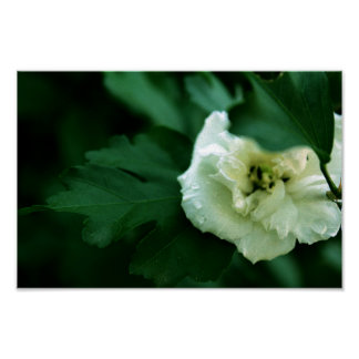 End of Summer Bloom Poster