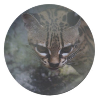 Endangered Ocelet in the myst decorative plate