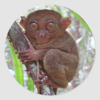 Endangered Phil. Tarsier -  Classic Round Sticker