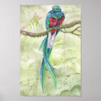 Endangered Quetzal Poster