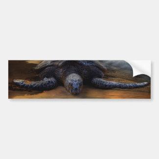Endangered Sea Turtle Bumper Sticker Car Bumper Sticker
