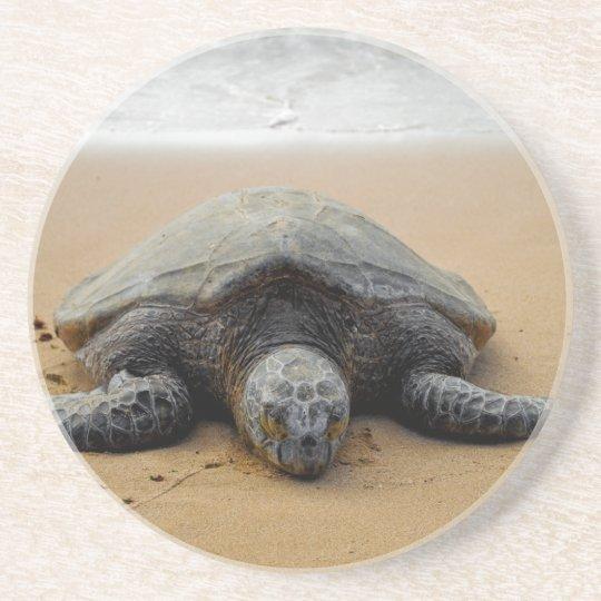 Endangered Sea Turtle Coaster