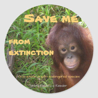Endangered Species Orangutan Wildlife Classic Round Sticker