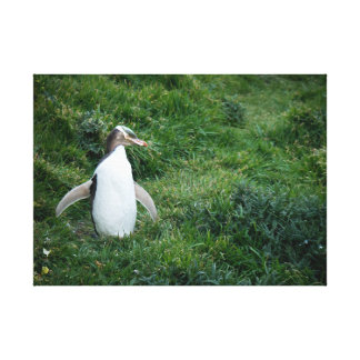 Endangered Yellow Eyed Penguin Canvas Print