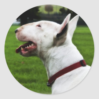 English Bull Terrier Classic Round Sticker