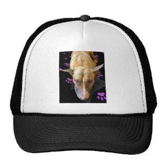 English Bull Terrier Hat Baseball Cap
