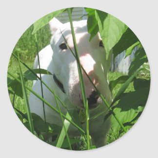 English Bull Terrier Peeking Through the Leaves Round Sticker