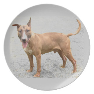English Bull Terrier Plate