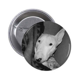 English Bull Terrier Snuggled Under a Blanket -BW 2 Inch Round Button