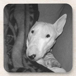 English Bull Terrier Snuggled Under a Blanket -BW Coaster