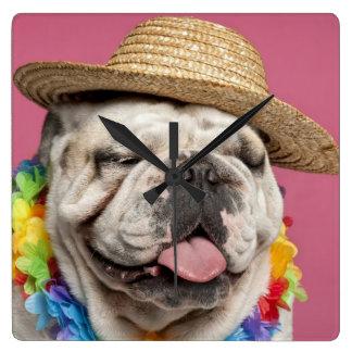 English Bulldog (18 months old) wearing a straw Clock