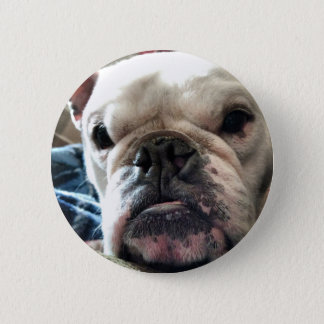 English Bulldog 2 Inch Round Button