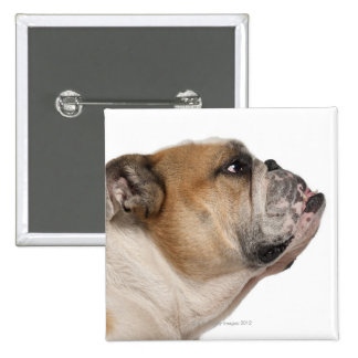 English Bulldog (6 years old) 2 Inch Square Button