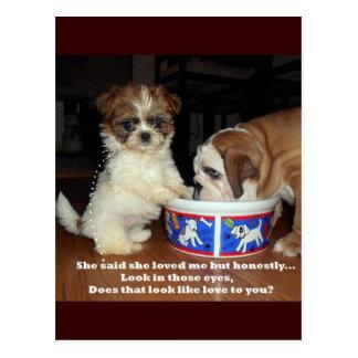 English Bulldog and Shih Tzu Puppy Postcard