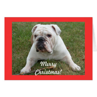 English Bulldog Christmas Cards