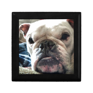 English Bulldog Gift Box