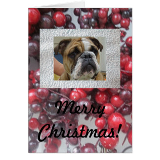 English bulldog Merry Christmas cards, cute! Card