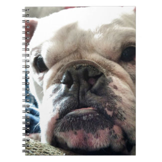 English Bulldog Notebook