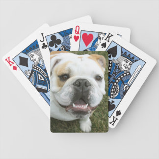 English bulldog playing cards