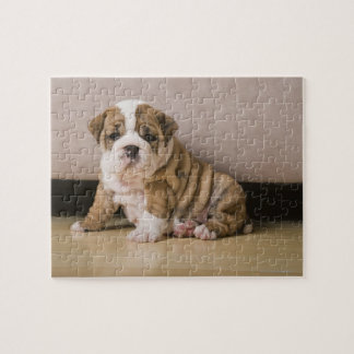 English bulldog puppies jigsaw puzzle