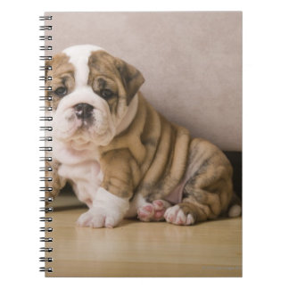 English bulldog puppies notebook