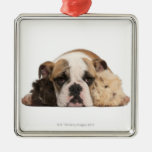 English bulldog puppy (4 months old) and two metal ornament