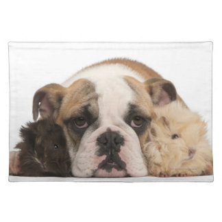English bulldog puppy (4 months old) and two placemats