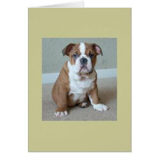 English Bulldog Puppy Card